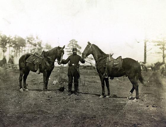 Col. Sharpe's horses, Falmouth, Va., April, 1863  33157u